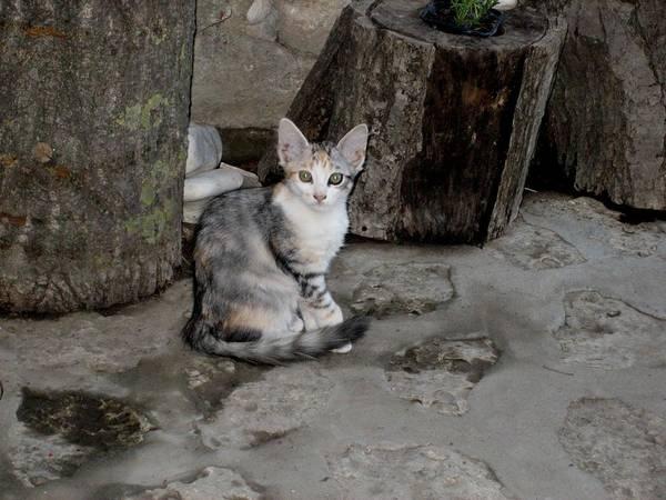 Wall Art - Photograph - Sweet Little Cat by Valia Bradshaw