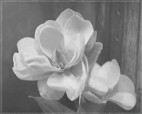 Mixed Media - Sweet Magnolia Blossom Bw by Teresa Wilson