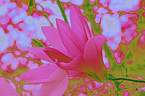 Posterize Photograph - Sweet Magnolia by Mina Thompson