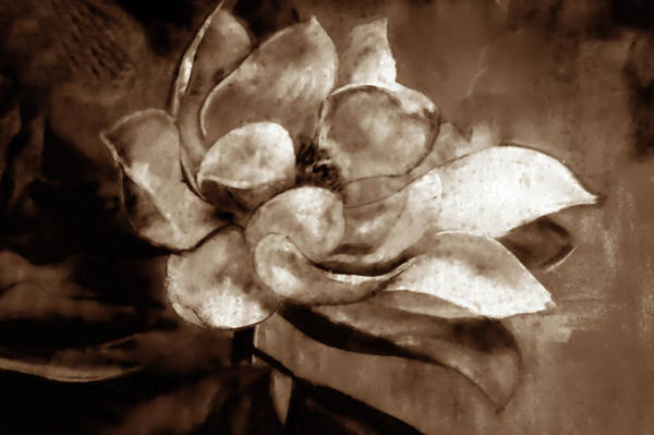 Mixed Media - Sweet Magnolia Of Alabama Sepia by Lesa Fine