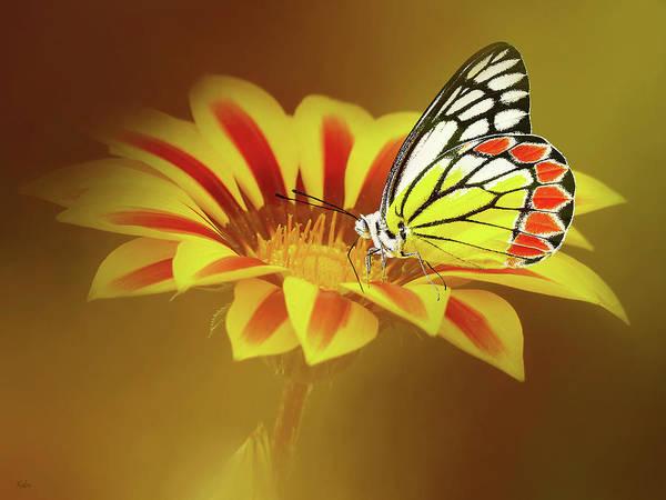 Nectar Mixed Media - Sweet Nectar by KaFra Art