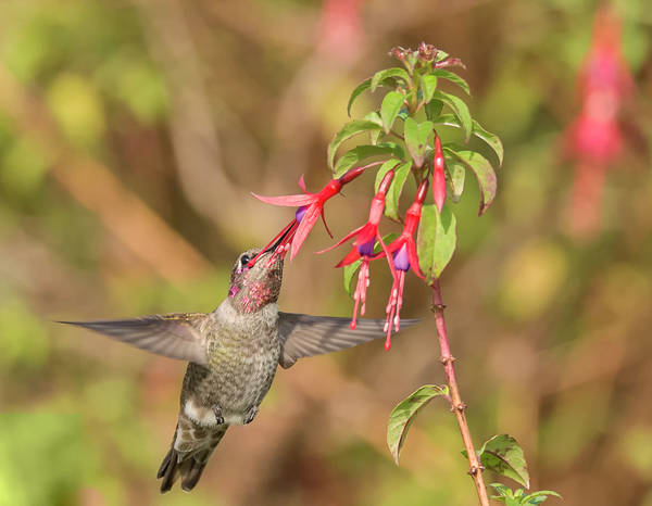 Photograph - Sweet Nectar by Loree Johnson
