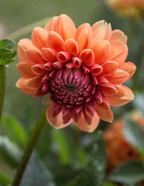Photograph - Sweet Orange by Arlene Carmel