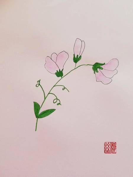 Painting - Sweet Pea by Margaret Welsh Willowsilk