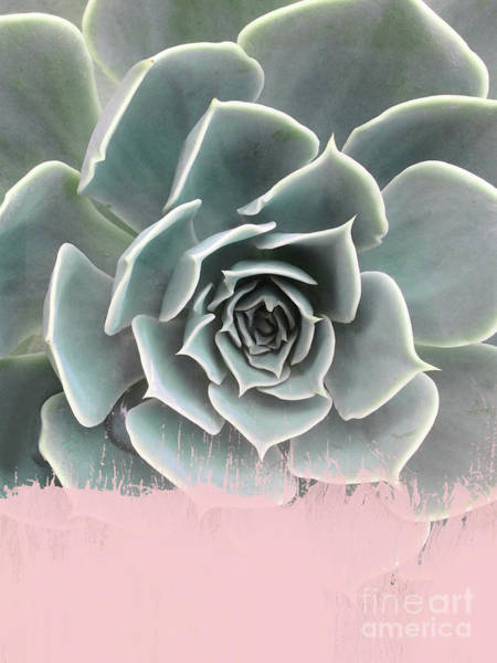 Cactus Wall Art - Mixed Media - Sweet Pink Paint On Succulent by Emanuela Carratoni