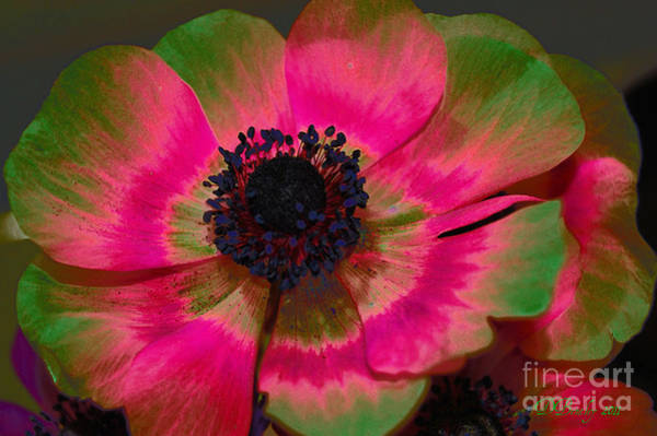 Photograph - Sweet Poppy Seed by Donna Bentley
