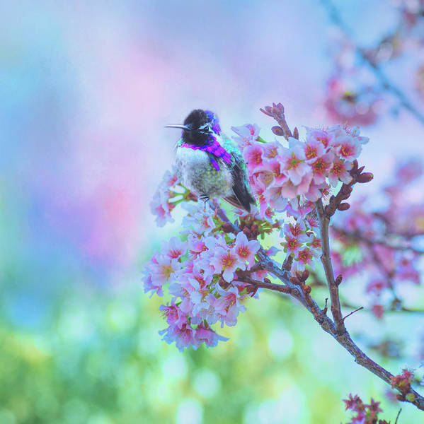 Photograph - Sweet Rewards Of Spring by Lynn Bauer