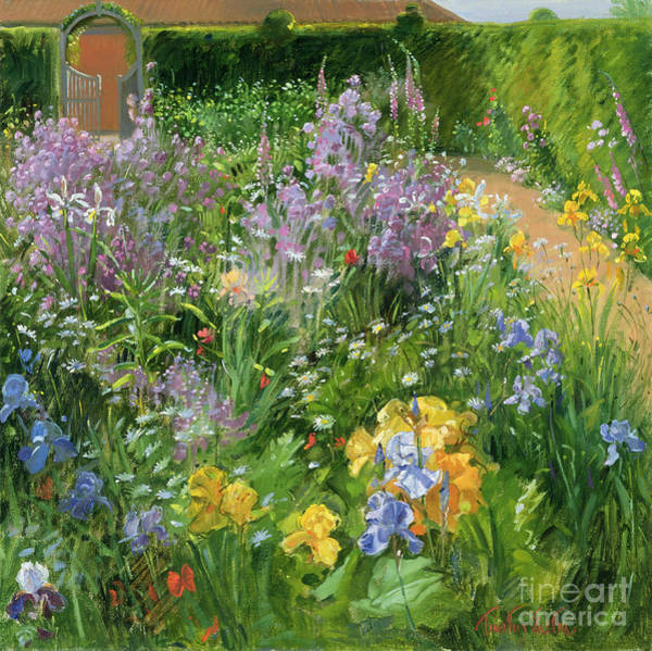 Wall Art - Painting - Sweet Rocket - Foxgloves And Irises by Timothy Easton
