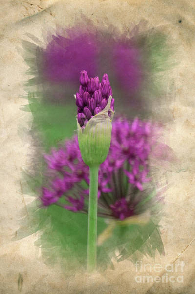 Photograph - Sweet Spring Allium by Mary Machare