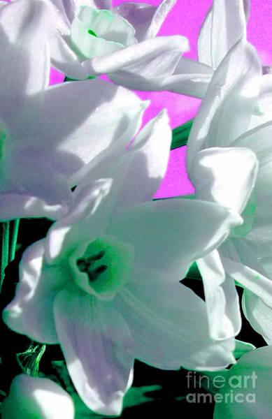 Black Narcissus Photograph - Sweet Surrender by JoAnn SkyWatcher