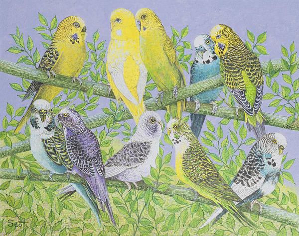 Green Parrot Drawing - Sweet Talking by Pat Scott