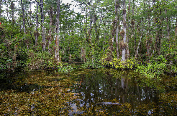 Everglades National Park Photograph - Sweet Water Strand - 10 by Rudy Umans