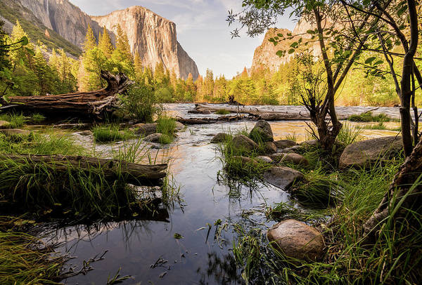 Photograph - Sweet Yosemite by Kristopher Schoenleber