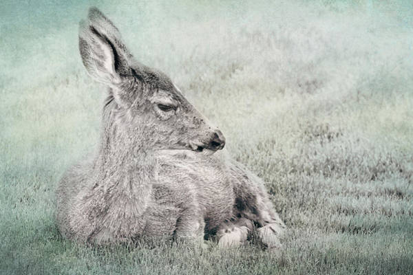 Photograph - Sweet Young Deer by Belinda Greb