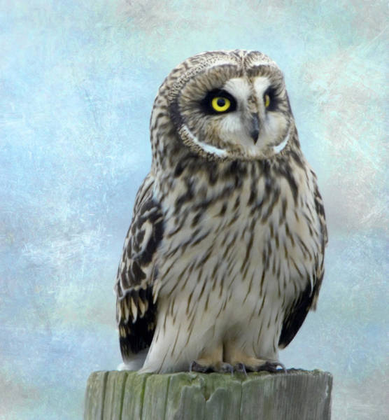 Photograph - Sweetest Owl Of All by Isabella Howard
