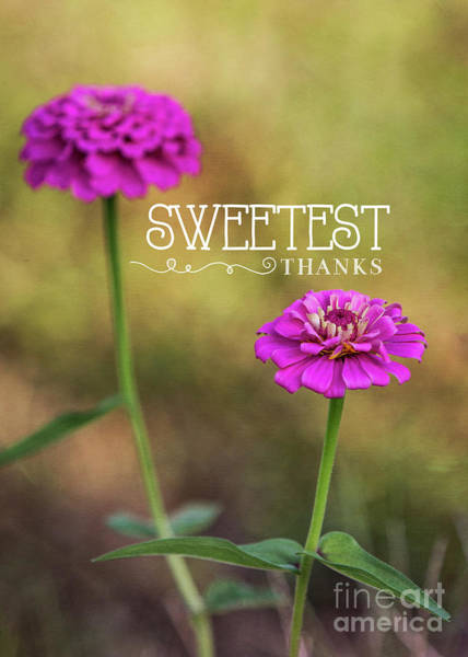 Mixed Media - Sweetest Thanks by Mechala Matthews