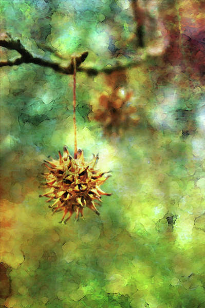 Photograph - Sweetgum Digital Watercolor 7560 W_2 by Steven Ward