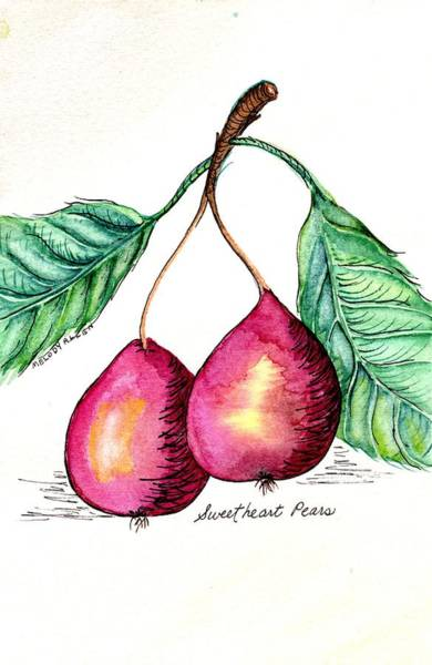 Wall Art - Painting - Sweetheart Pears by Melody Allen