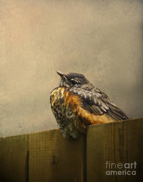 Baby Bird Photograph - Sweetly Sitting by Jan Piller