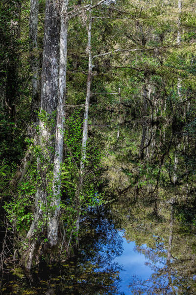 Photograph - Sweetwater Strand - 11 by Rudy Umans