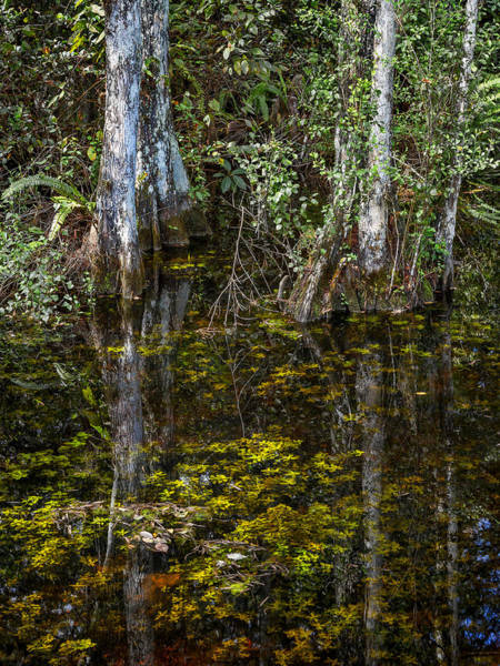 Photograph - Sweetwater Strand - 8 by Rudy Umans