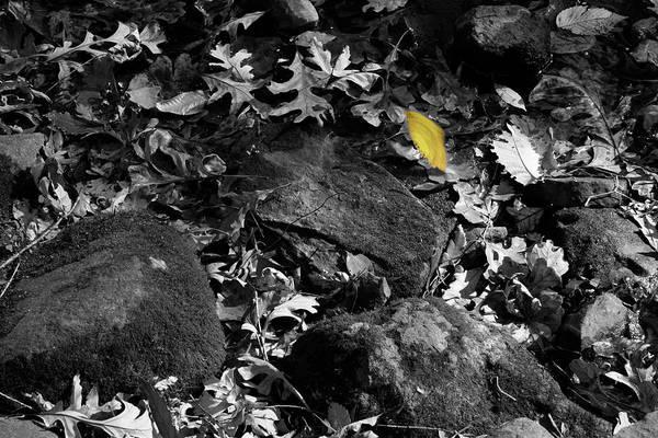 Photograph - Swift by Dylan Punke
