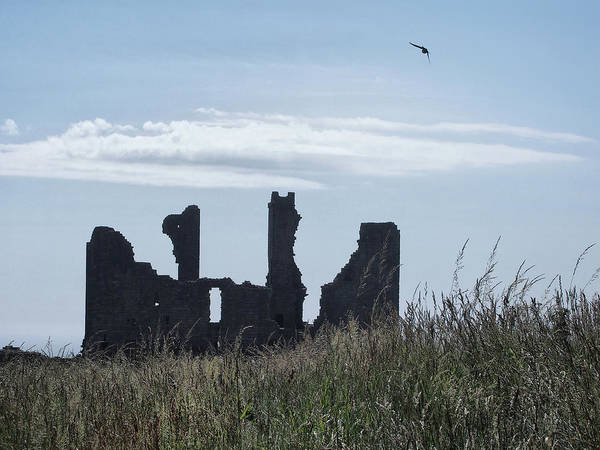 Northumbria Photograph - Swift Over Dunstanburgh Castle - Colour by Philip Openshaw
