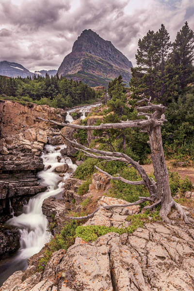 Photograph - Swiftcurrent Lake Falls by Peter Tellone