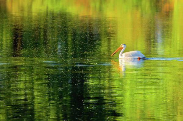 Photograph - Swimming In Color by John De Bord