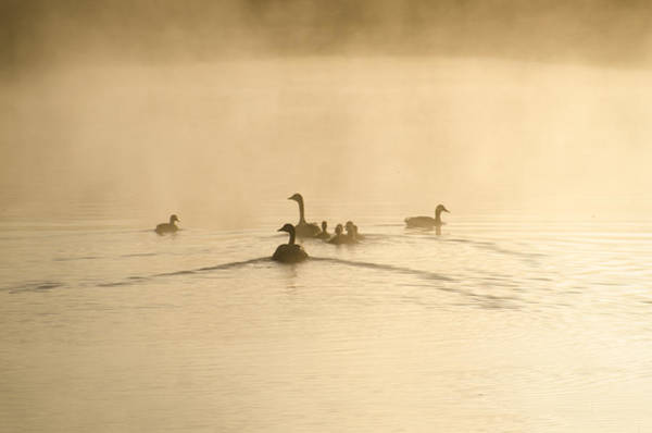Wall Art - Photograph - Swimming In The Mist by Bill Cannon