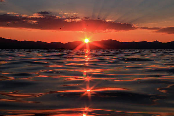Herron Photograph - Swimming Into Tahoe's Magic Light by Mike Herron