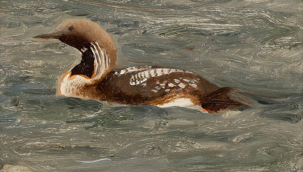 Loon Painting - Swimming Loon by Bruno Liljefors