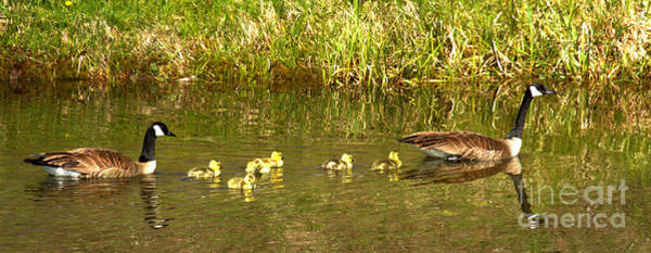 Photograph - Swimming With The Youngsters At Schwabacher Landing by Adam Jewell