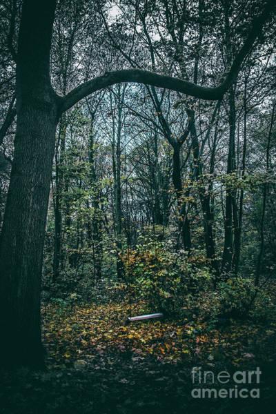 Photograph - Swing by Ana Mireles