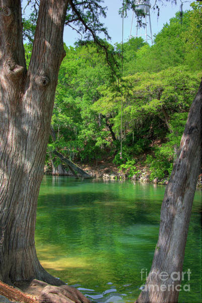 New Braunfels Photograph - Swinging River Rope  by Kelly Wade