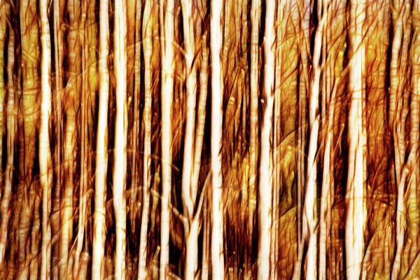 Photograph - Swipe Of A Forest-abstract by Don Johnson