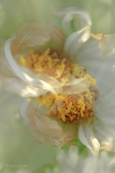 Photograph - Flower Swirl.... by Paul Vitko
