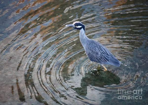 Squawk Photograph - Swirls Around Heron by Carol Groenen