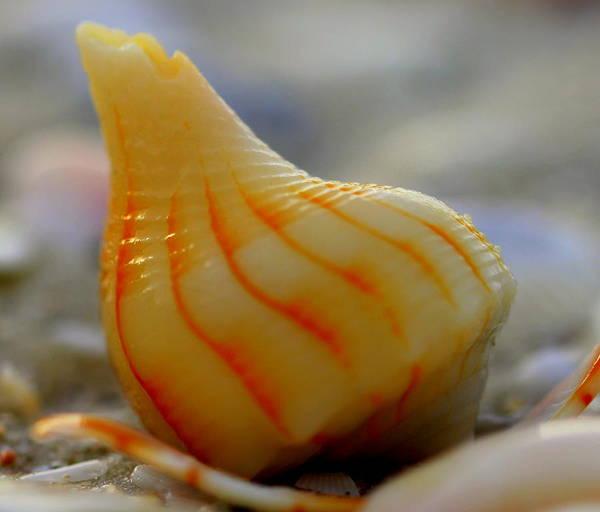 Photograph - Swirly by Sean Allen