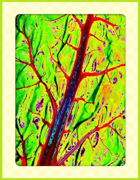 Wall Art - Digital Art - Swiss Chard Abstract by Will Borden