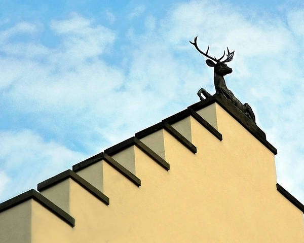 Photograph - Swiss Deer On Zurich Rooftop by Ginger Wakem