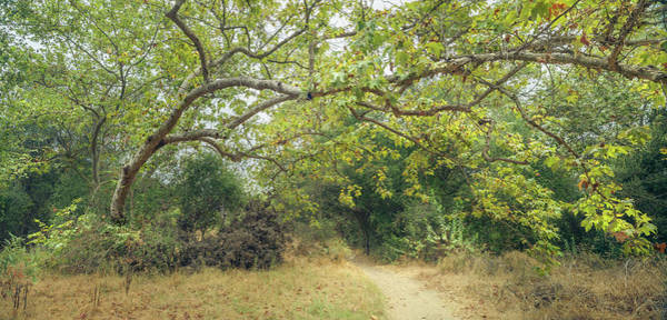 Photograph - Sycamore And Trail by Alexander Kunz