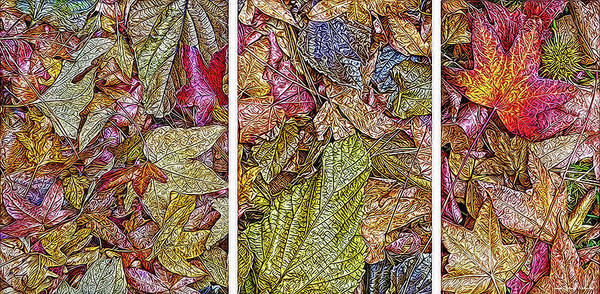 Digital Art - Sycamore Autumn Visions - Triptych by Joel Bruce Wallach