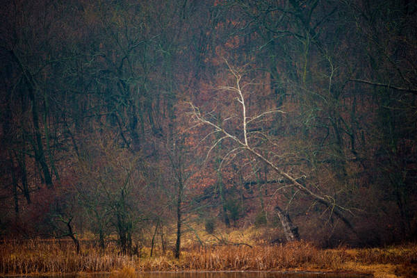 Photograph - Sycamore Inclination by Jeff Phillippi