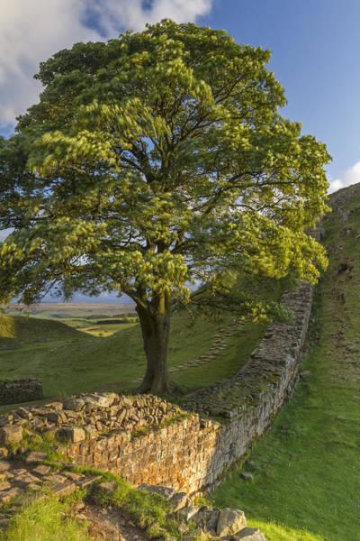 Hadrians Wall Photograph - Sycamore View by David Taylor