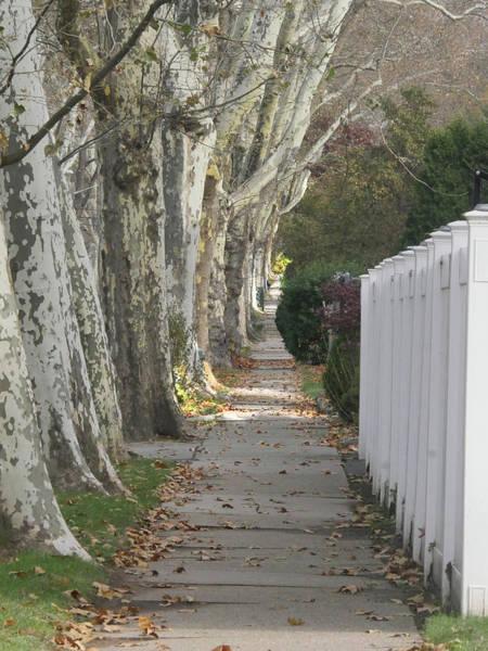Photograph - Sycamore Walk by Leon deVose