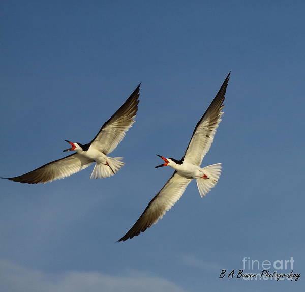 Photograph - Sychronized Flying by Barbara Bowen