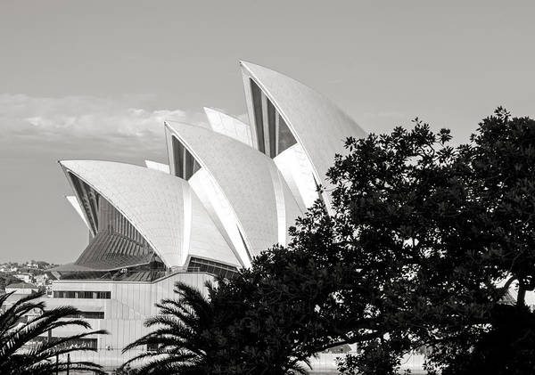 Photograph - Sydney Opera House Black And White by Nicholas Blackwell