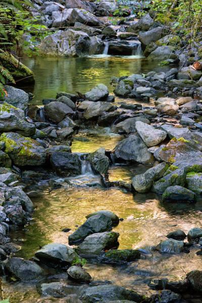 Respite Photograph - Sylvan Stream by Kathleen Bishop