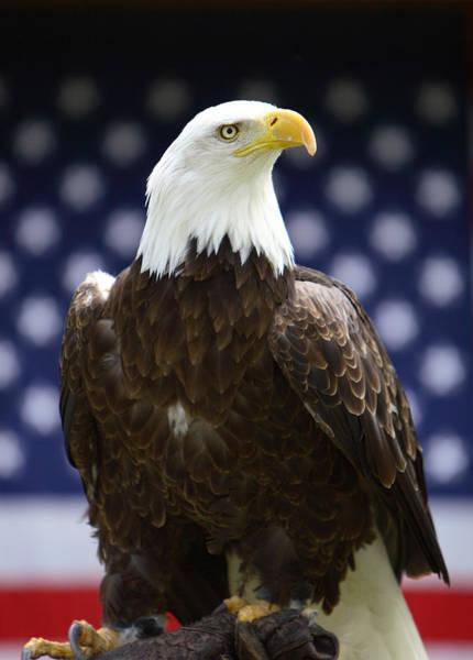 Photograph - Symbol Of America by David Andersen